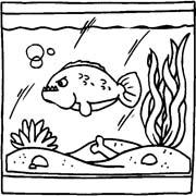 acquari pesciolini immagine da colorare n. 8173