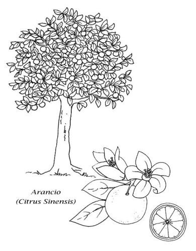 Alberi Immagine Da Colorare N 16507 Cartoni Da Colorare