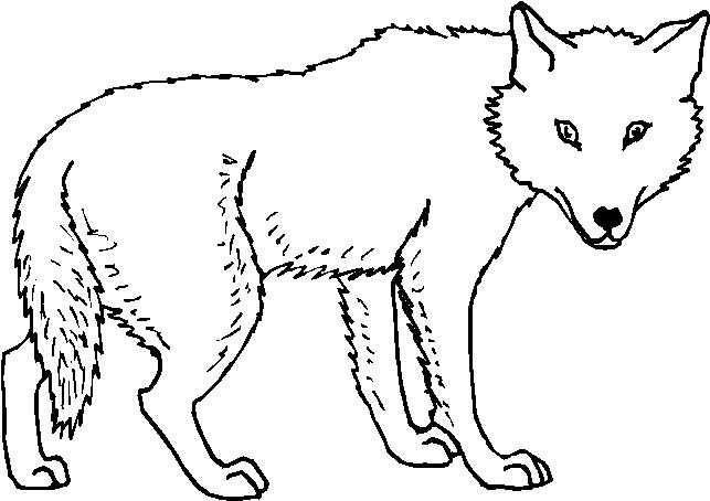 Animali foresta immagine da colorare n 11953 cartoni da for Disegni da colorare animali della foresta