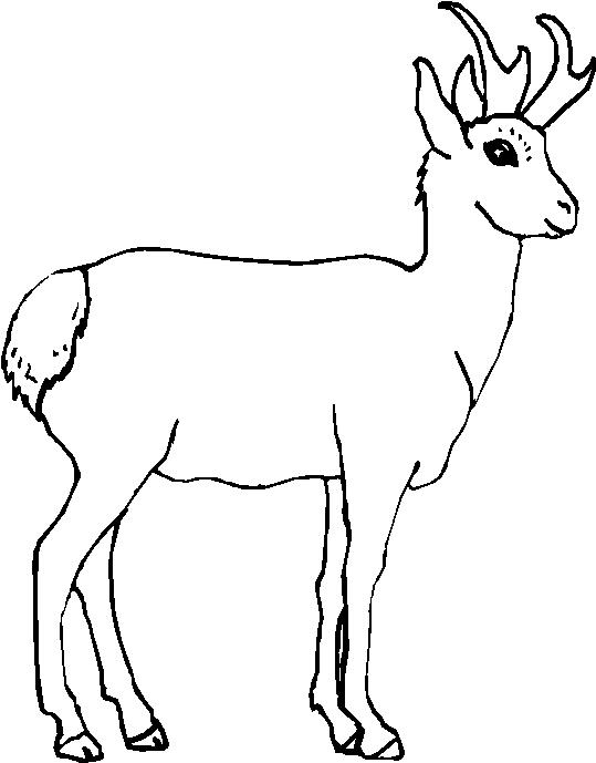 Animali foresta immagine da colorare n 29917 cartoni da - Immagini di animali da stampare gratuitamente ...