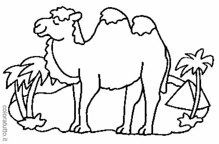 Immagini da colorare cammelli cartoni da colorare - Dessin de chameau ...