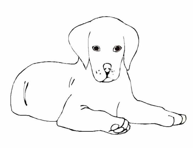 Cani immagine da colorare n 10996 cartoni da colorare for Cane da disegnare per bambini