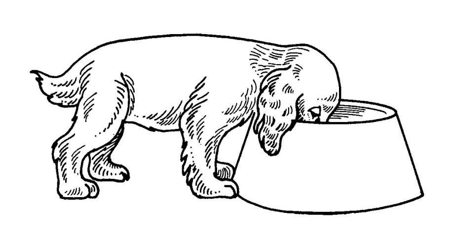 Cani immagine da colorare n 1510 cartoni da colorare for Cani da colorare e da stampare