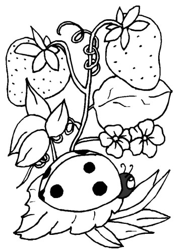 Coccinelle Immagine Da Colorare N 1040 Cartoni Da Colorare