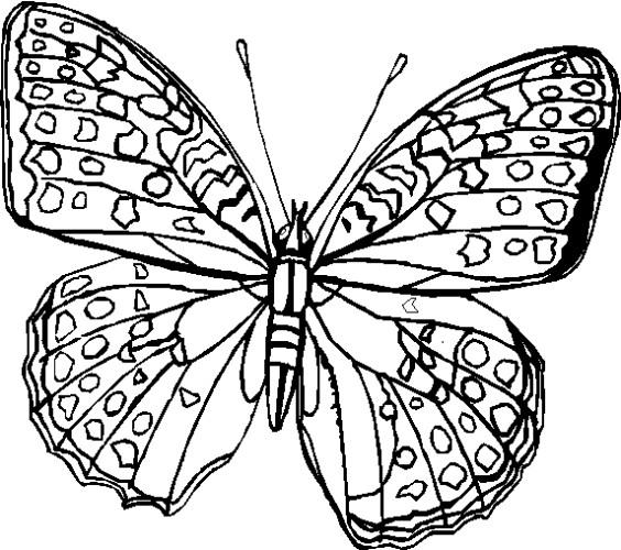 Farfalle Immagine Da Colorare N. 10626