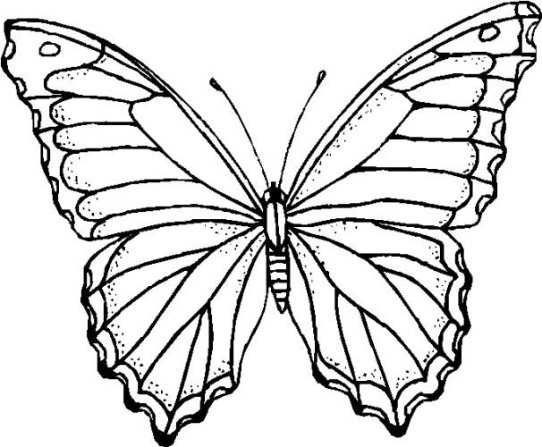 Immagini Da Colorare Farfalle Pagina 8 Di 10 Cartoni Da Colorare