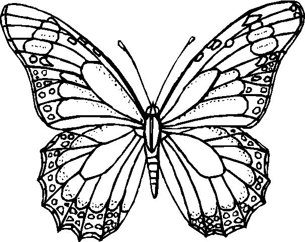 Farfalle Immagine Da Colorare N 17843 Cartoni Da Colorare