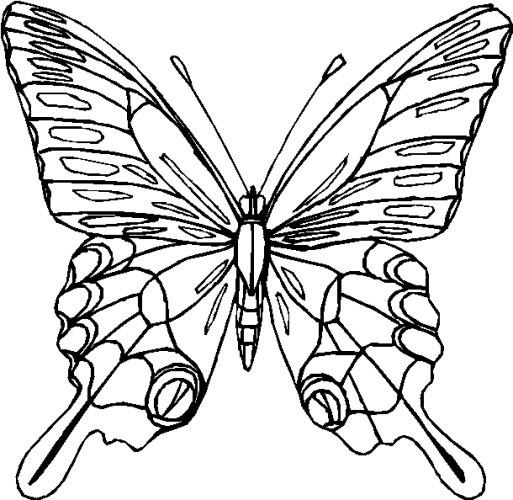 Farfalle immagine da colorare n 28512 cartoni da colorare for Immagini farfalle da ritagliare