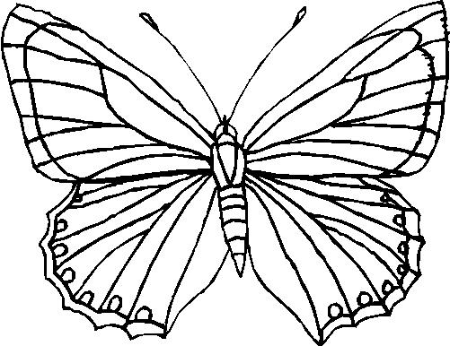Farfalle Immagine Da Colorare N 4984 Cartoni Da Colorare
