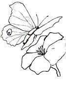 immagine farfalle da colorare