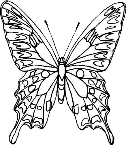 Farfalle Immagine Da Colorare N 6357 Cartoni Da Colorare