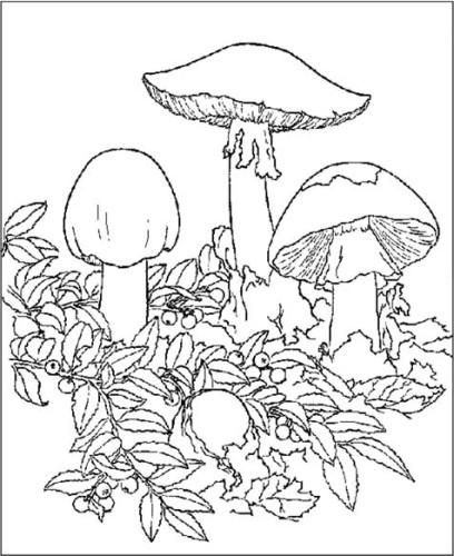 immagine funghi da colorare