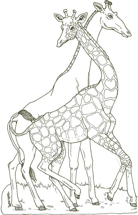 Giraffa Disegni Per Bambini Affordable Cool Best Of Foto Circa
