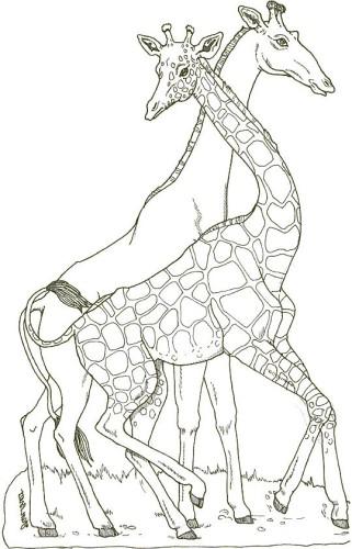 Giraffa Immagine Da Colorare N 2747 Cartoni Da Colorare