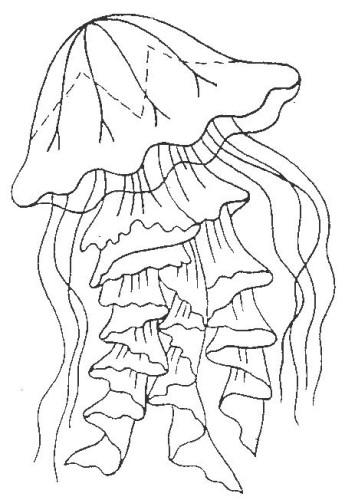 Meduse immagine da colorare n 4914 cartoni da colorare for Medusa da colorare